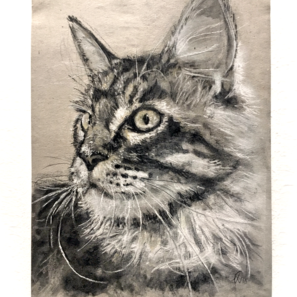 kattetegning_cat_drawing