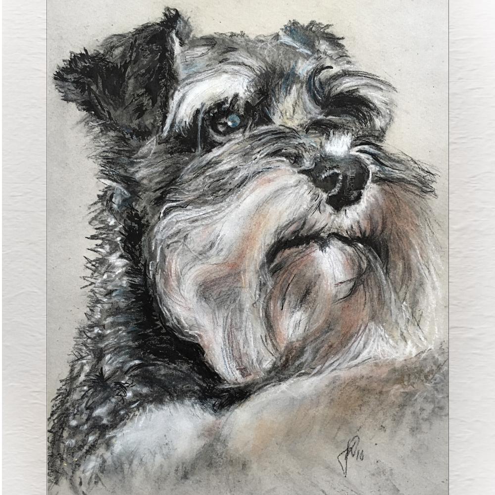 portrættegning hunde, katte, dyr portrættegner unik gaveide julegave hundetegning_miniature_schnauzer