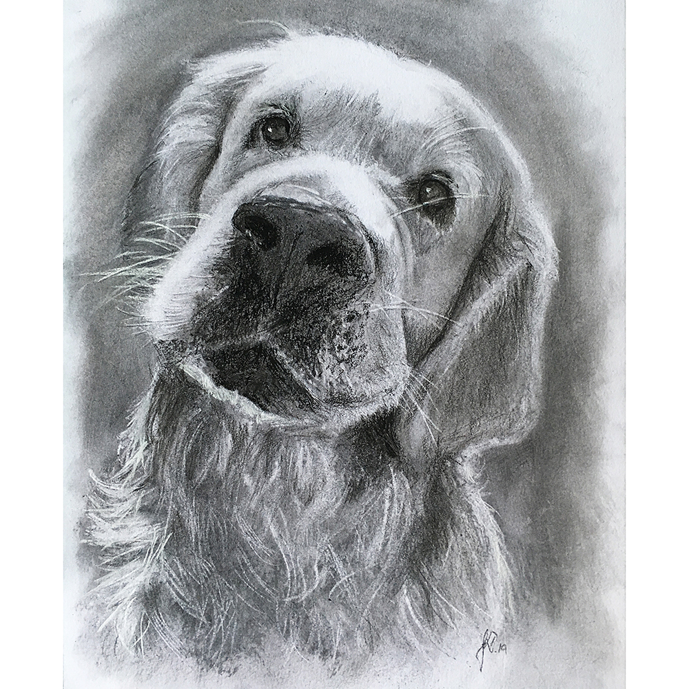 portrættegning portrættegner hundeportraet_dogportrait_gaveide_unik_tegning håndtegnet