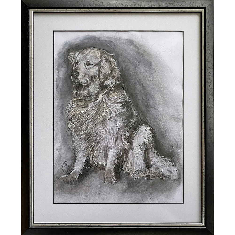 hundeportraet_portraettegning_unik_gaveide_dog_portrait_drawing_golden_retriever
