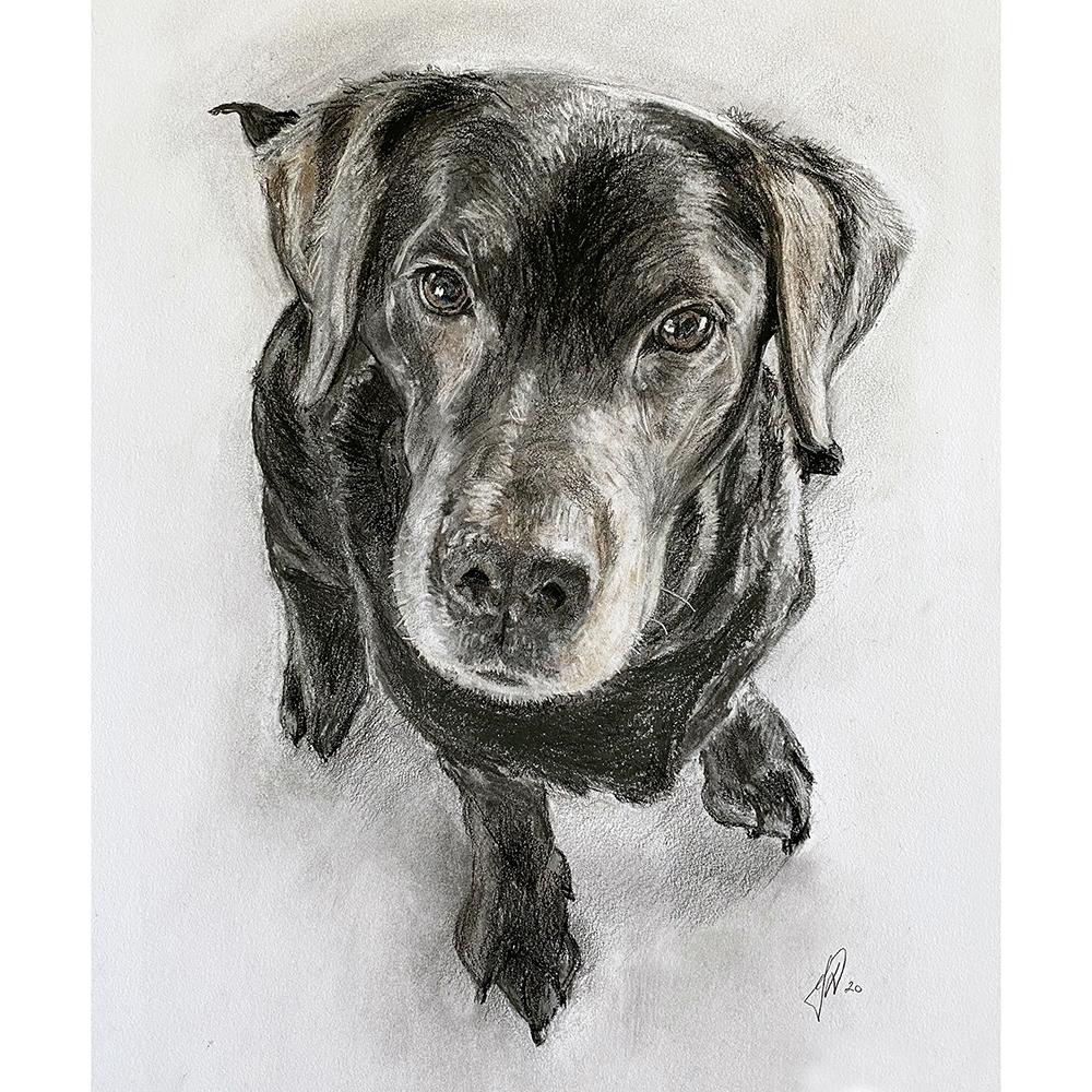 hundeportraet_portraettegning_portraettegner_tegning_hund_gaveide_personlig