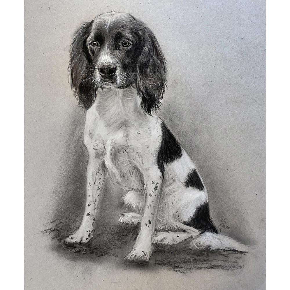hundeportraet_hundetegning_blyant_kul_springerspaniel_gaveide_jaeger_julegave