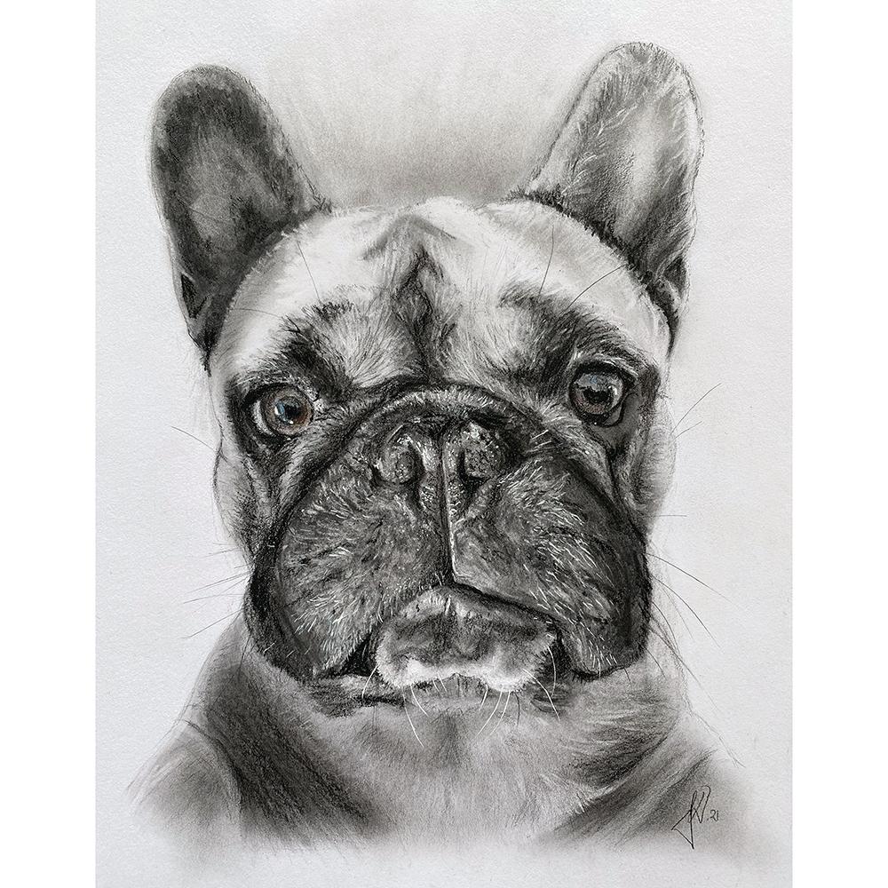 hundeportraet-tegning-fransk-bulldog-portraettegner-portraettegning
