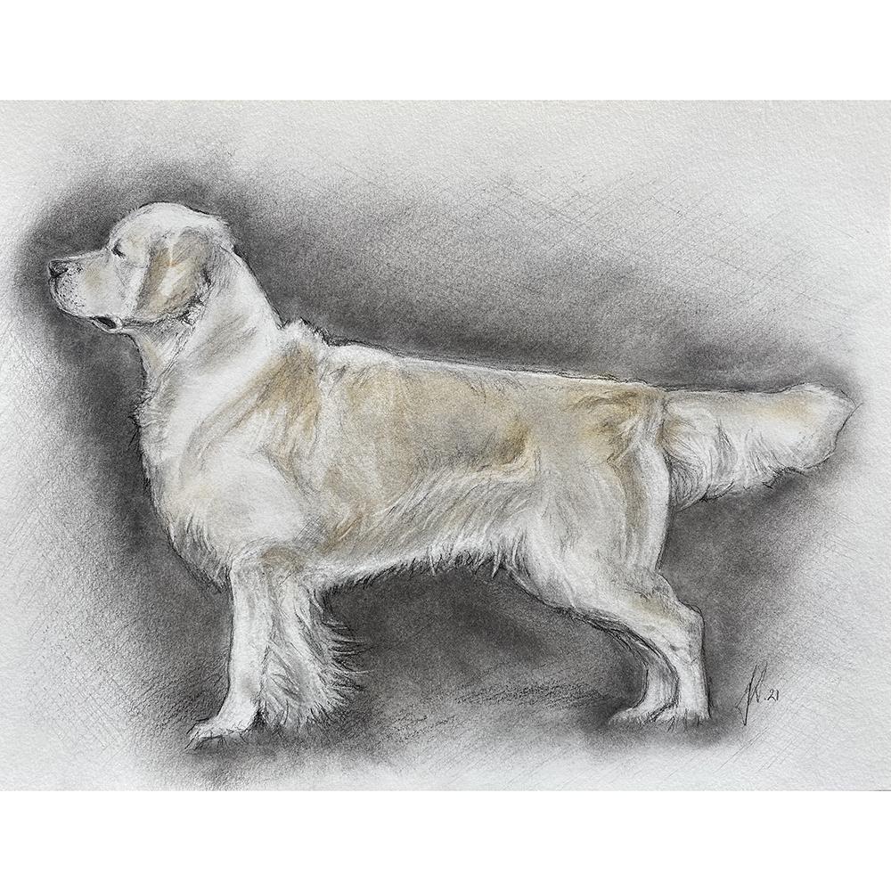 hundeportraet-tegning-portraettegning-gaveide-hundeelsker