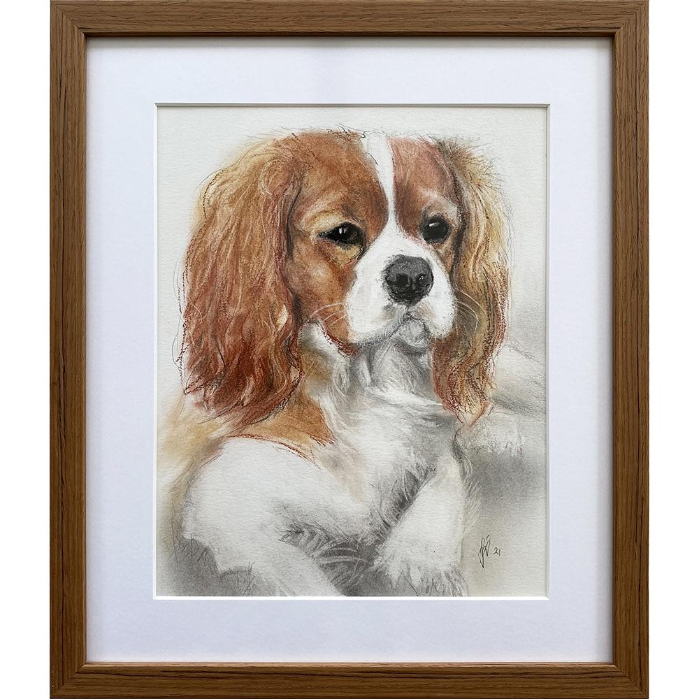 hundetegning-tegning-af-Cavalier-King-Charles-Spaniel
